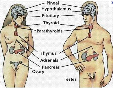 Nude People Diagram